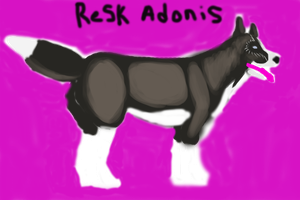 ReSK NFK's Mad Adonis by CalliesKennel