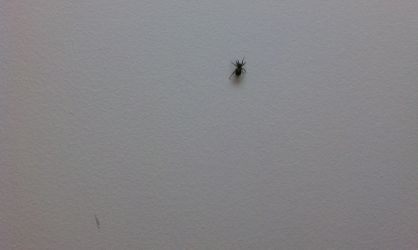 Insects In and Around My Office 4 by Nightvaj