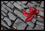 Fallen Red by Aderet