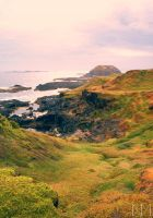 on phillip island by NicolasM