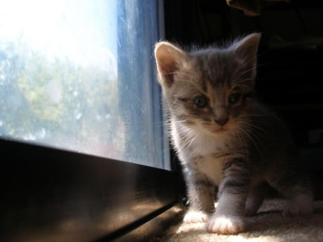 little kitten by ceciliay