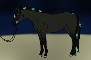 .:Hund's Ongoing RNG Mini Show: Halter:. by RodeoLuvr