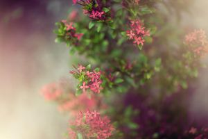 Blooming In The Mist by NatashaSmithPhoto