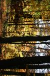 Autumn Woods by Passion4Photos