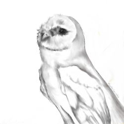 owl by IKillDeadThings