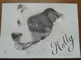 Molly by davidsteeleartworks