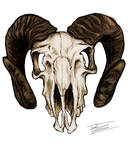 Goat Skull by Jameswhite89