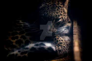 panther by Perseus67