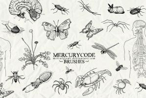 Brushset 03: biology by mercurycode