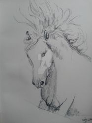White Horse Drawing by dropthehaze