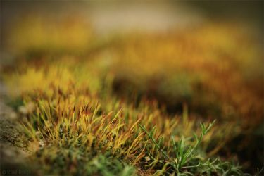 Flowering Moss by Florenaut