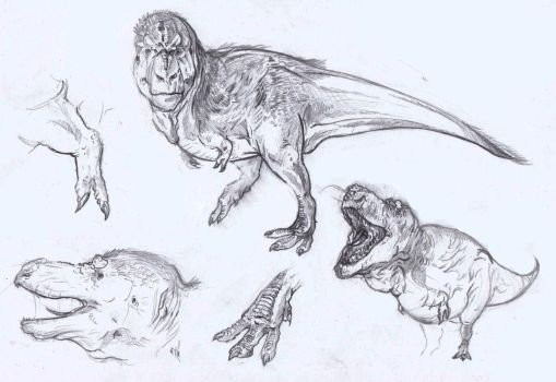Some quick Tyrannosaur sketches/studies by DanneArt