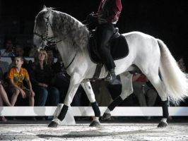 Stock - Andalusian 2 by EleganceApparent