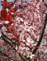 Spring pink flowers by ad-dushk-ad
