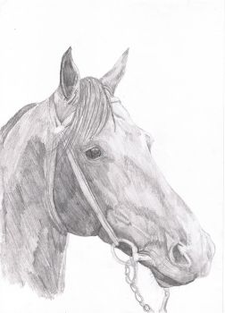 Thoroughbred 1994 by missipepper