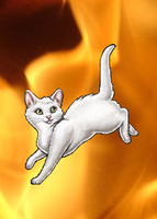 Cat Avatar Background Change by nive2000