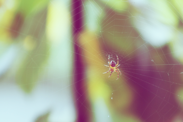 Just a spider by HoneyCookie