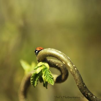 New life. by WALKING-GIRL