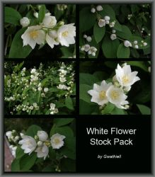 White Flower Stock Pack by Gwathiell