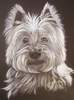 west highland terrier by shirls-art
