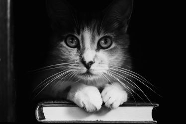 Book Cat by TRIS31
