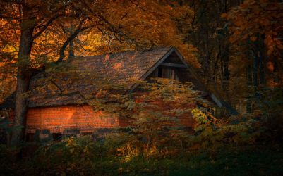Cottage in the wood by maariusz