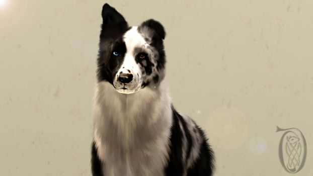 Blue Merle Sims 3 Border Collie - Reality's Maze by SpirityTheDragon