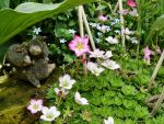 Count the froglets by Thelma1