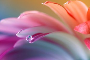 Colors and curves by LiaCam