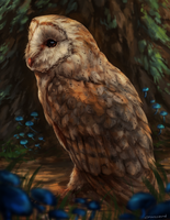 Barn Owl by CorvusHound