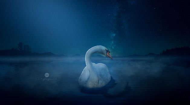 Swan lost love by artofexpo