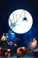 Among dust and candles (Spider Still LIfe) by dinabelenko