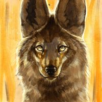 The Enlightened Coyote by brushandtea