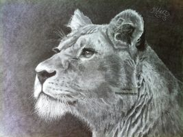 'Lioness' - 2013 - (Drawing) by Stevegillettart
