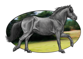 Welsh cob grayscale by molleisadog