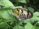 Butterfly 04 by Sunspot01
