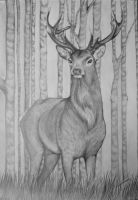 A3 Stag Drawing by bexyboo16