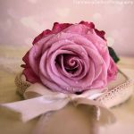 Soft and romantic rose by FrancescaDelfino