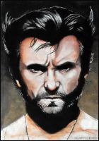 Wolverine by scary-scenes