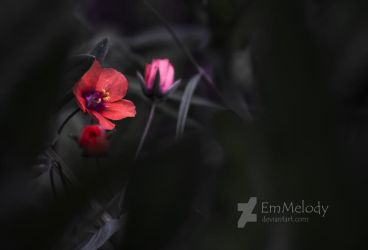 Simple Beauty by EmMelody