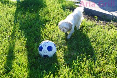 Soccer by AriaGrill