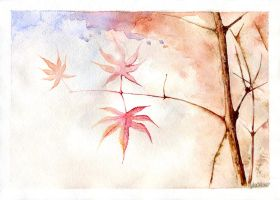 Acer by jakhont
