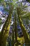 Trees_3 by P3droD