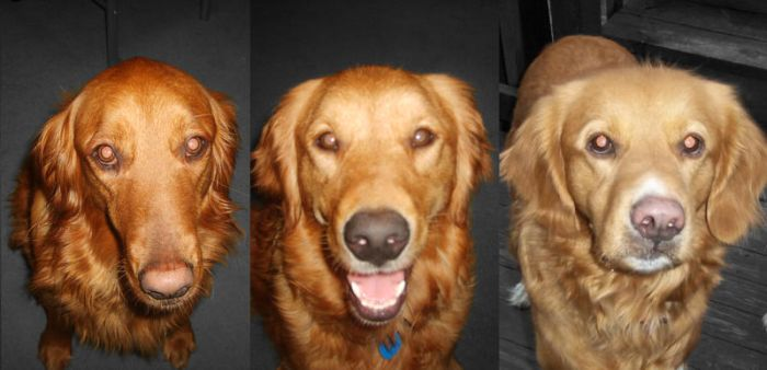 Ginger, Mindy, Murphy by Mandy31492