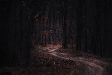 In the woods XVI by MoonKey19