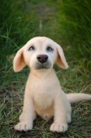 Dog labrador Needle Felted Sculpture by Lyntoys