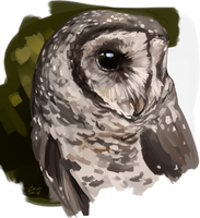 Sooty Owl by CorvusHound