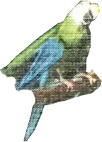 Parrot (4) (stock) by linux-rules