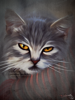 cat painting by perlaque