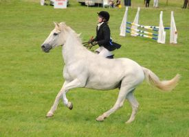 removed tack sport horse by suuslovertje